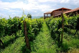 {:ru}Винный тур по Грузии{:}{:en}Wine tour in Georgia{:}
